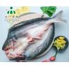 供应安徽三珍食品冷冻开背巴沙鱼 烤鱼食材直销